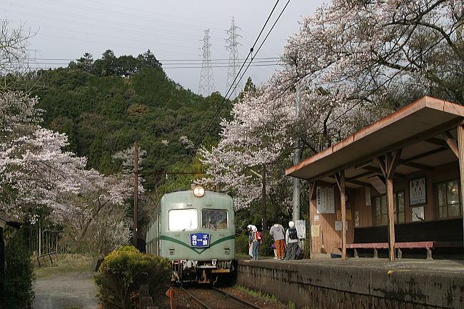 05 桜舞う季節の川根路
